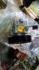 POMPA POWER STEERING NISSAN X - TRAIL T 30 TAHUN 2003-2007